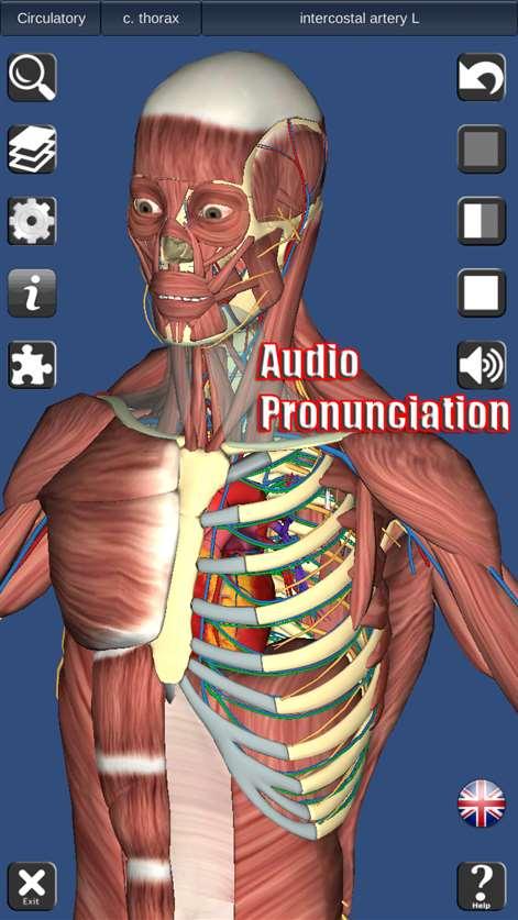3d Human Anatomy Software Gallery Human Anatomy Diagram