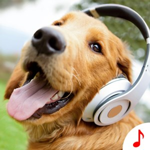Dog Sounds - Funny Animal Ringtones