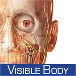 Human Anatomy Atlas - 3D Anatomical Model of the Human Body – Guide for Medical Students & Doctors