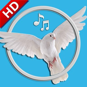 Bird Sounds & Ringtones for Kids & Adults | FREE Windows