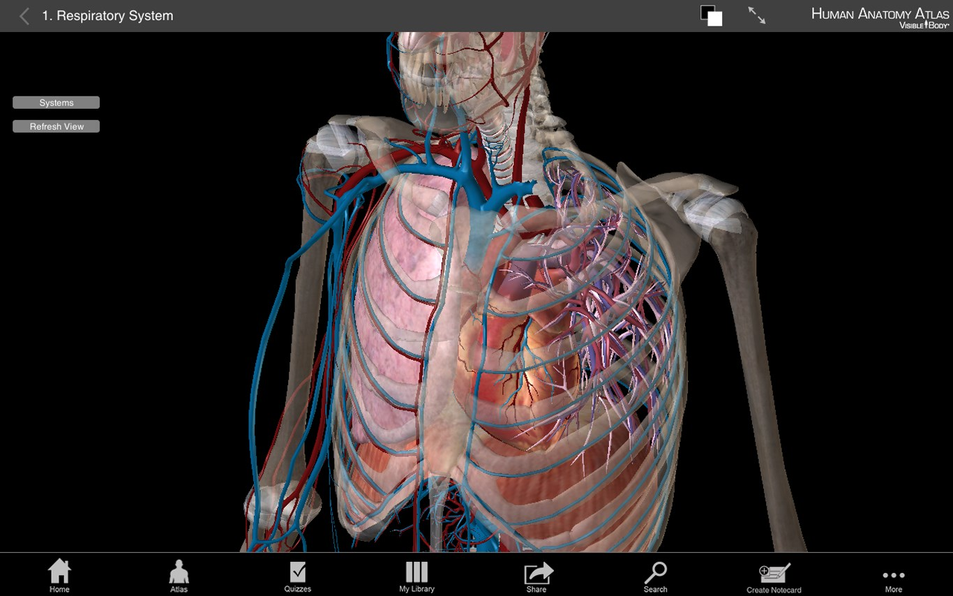 Atlas anatomy 3d
