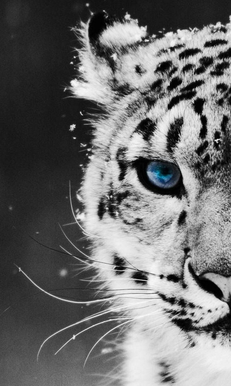 Best Wallpaper Mobile Tiger - apps  Perfect Image Reference_74882.4c5ef802-a24d-4295-a0a5-779144f7ab35