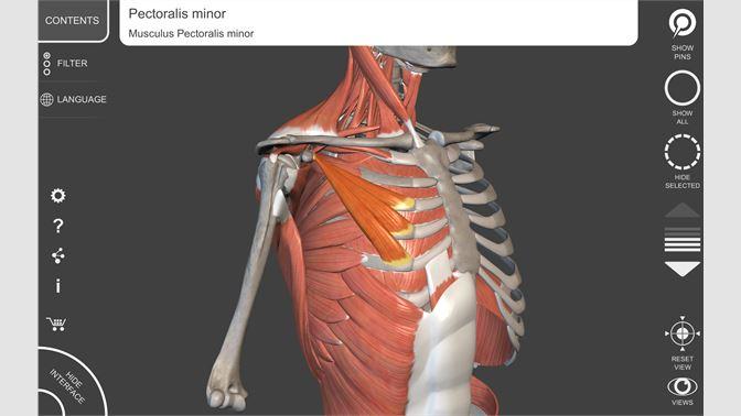 Buy Muscular System - 3D Atlas of Anatomy - Microsoft Store
