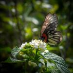 Botanical Garden by Chris Chung