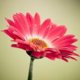 Get free flowers wallpapers hd microsoft store mightylinksfo