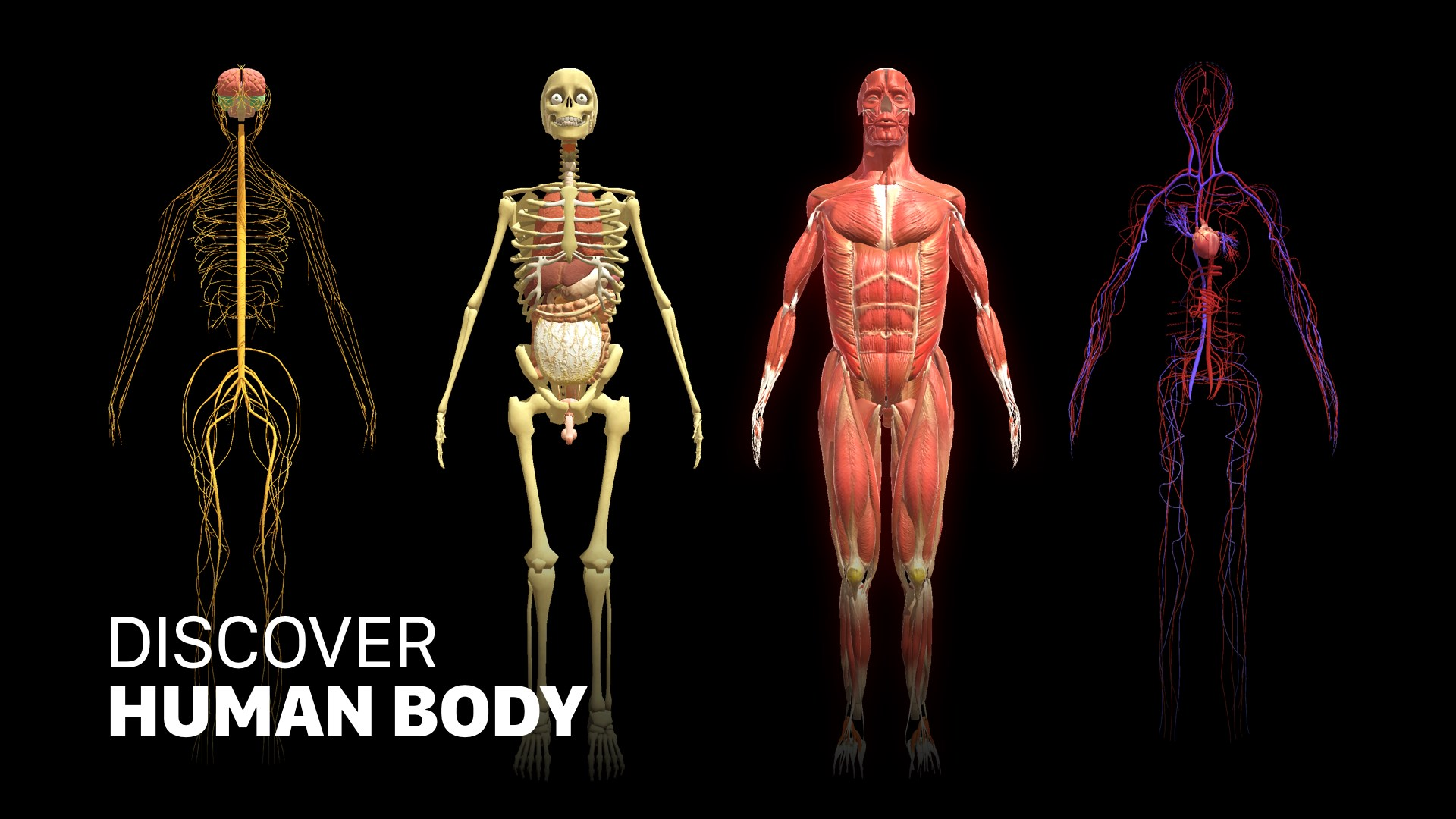 Get Discover Human Body - Anatomy and Physiology - Microsoft Store en-lk