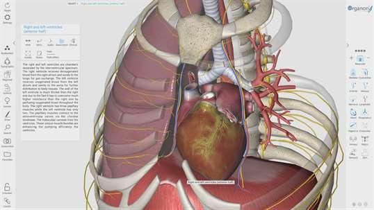 3D Organon Anatomy for Windows 10 PC Free Download - Best