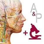 Anatomy & Physiology: Intro of Human Body Systems Logo