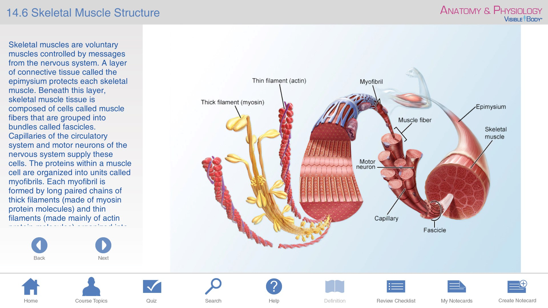 Anatomy & Physiology - Learn Anatomy Body Facts - Study Reference ...