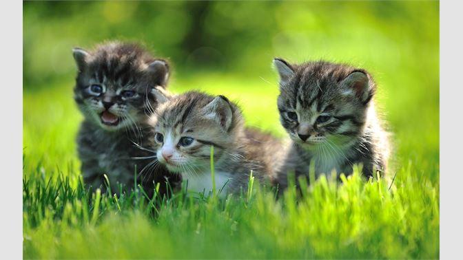 Get Baby Animals Microsoft Store