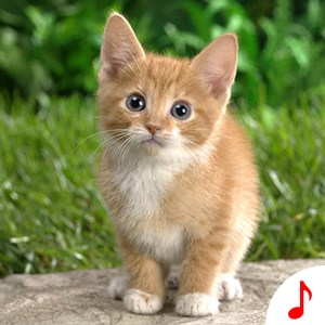 Cat Sounds - Cool Animal Ringtones