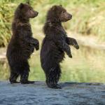 Bear Landscapes