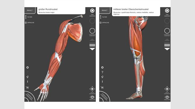 Muskeln | Skelett - 3D Anatomie kaufen – Microsoft Store de-CH