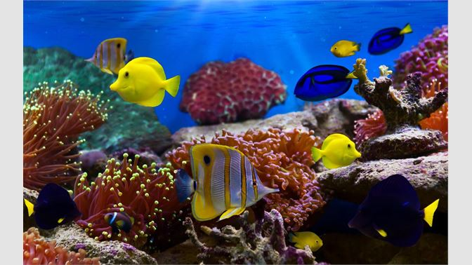 Get Fish And Corals