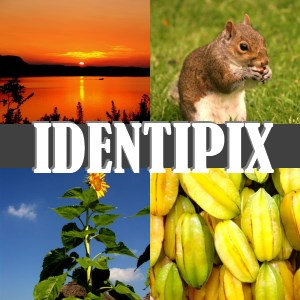 Identipix