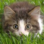 I Wanna Kitty