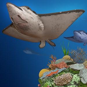 get remix 3d ocean life microsoft store en pg