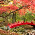 Bridges in Autumn