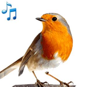 Bird Calls, Sounds & Ringtones