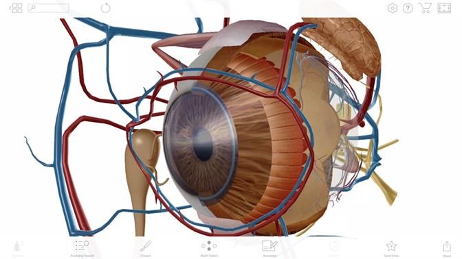 Comprar Human Anatomy Atlas 2018: Complete 3D Human Body - Microsoft ...