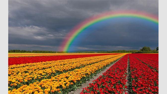 Get Fields Of Flowers Microsoft Store