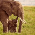 Animal Mothers
