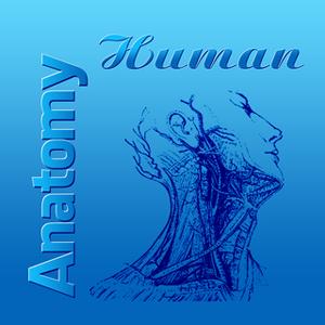 Human Anatomy Pro
