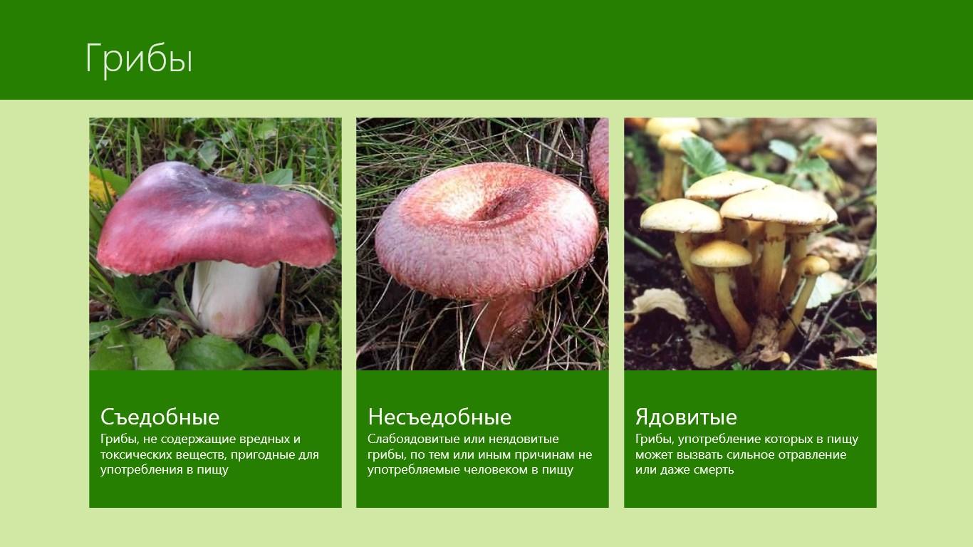 Съедобные грибы описание картинки