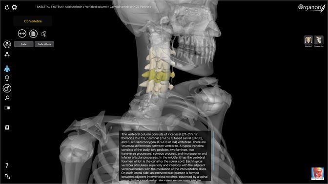 Get 3d Organon Anatomy Skeleton Bones And Ligaments Microsoft
