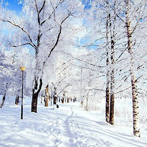 Get Winter Wallpaper Microsoft Store