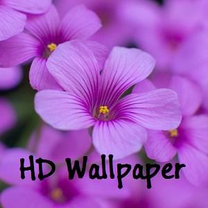 get flower lockscreen microsoft store