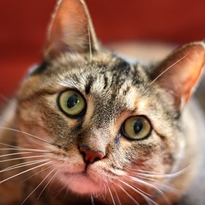 Free Cat Wallpapers