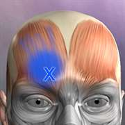 Buy Muscle Trigger Points Anatomy - Microsoft Store