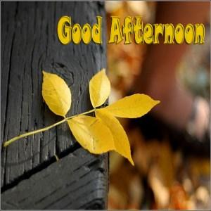 Get good afternoon messages images text sms microsoft store en au m4hsunfo