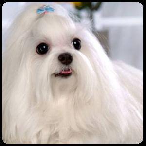 Get Cute Dog Wallpapers Microsoft Store En Bd