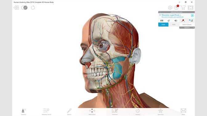 Buy Human Anatomy Atlas 2019: Complete 3D Human Body