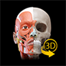 Muscular System - 3D Atlas of Anatomy
