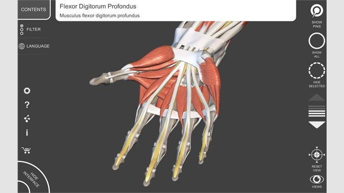 Buy Muscular System - 3D Atlas of Anatomy - Microsoft Store