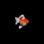 Fishy Fishy Fish