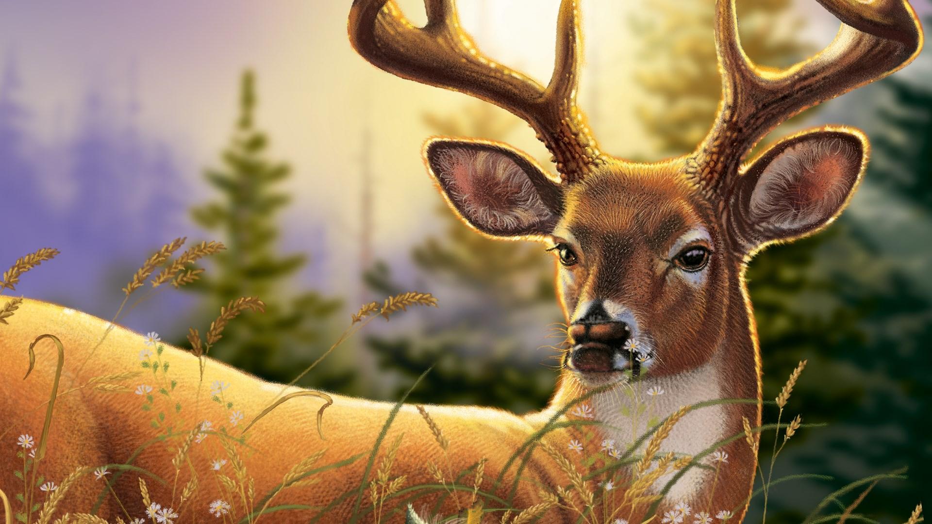 Elk Adventure