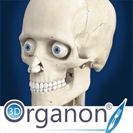 Get 3D Organon Anatomy