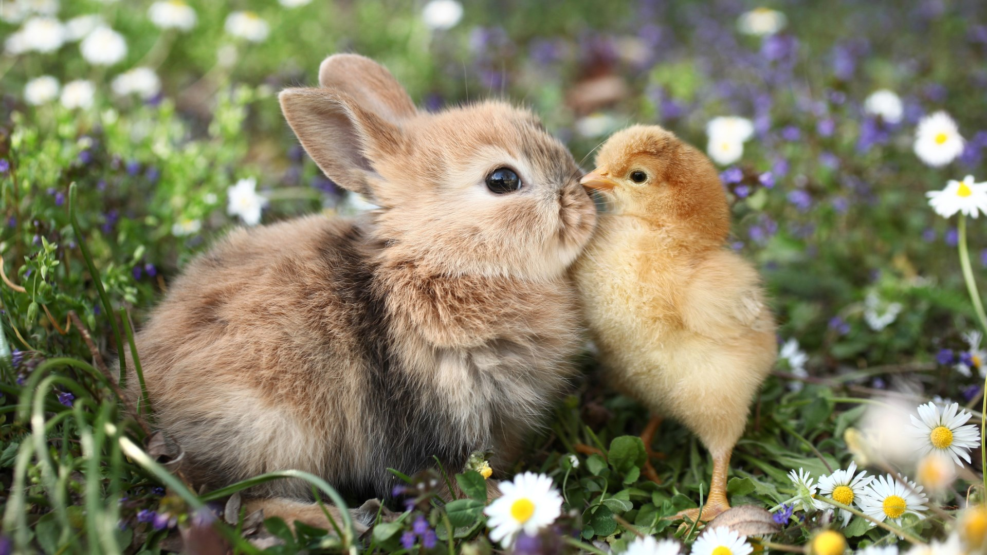 Image result for bunnies and chicks