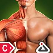 Sports Anatomy 3D Free - Continuum Pack