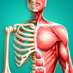 Discover Human Body - Anatomy and Physiology Logo