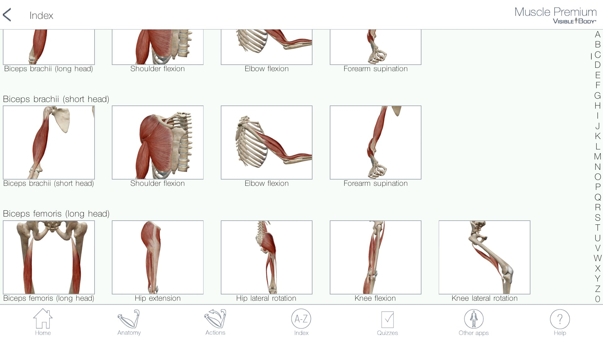 Muscle Premium: 3D Visual Guide for Bones, Joints & Muscles — Human ...