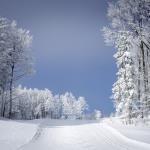 Ski Paradise