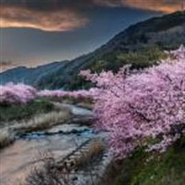 Blossoms.Com