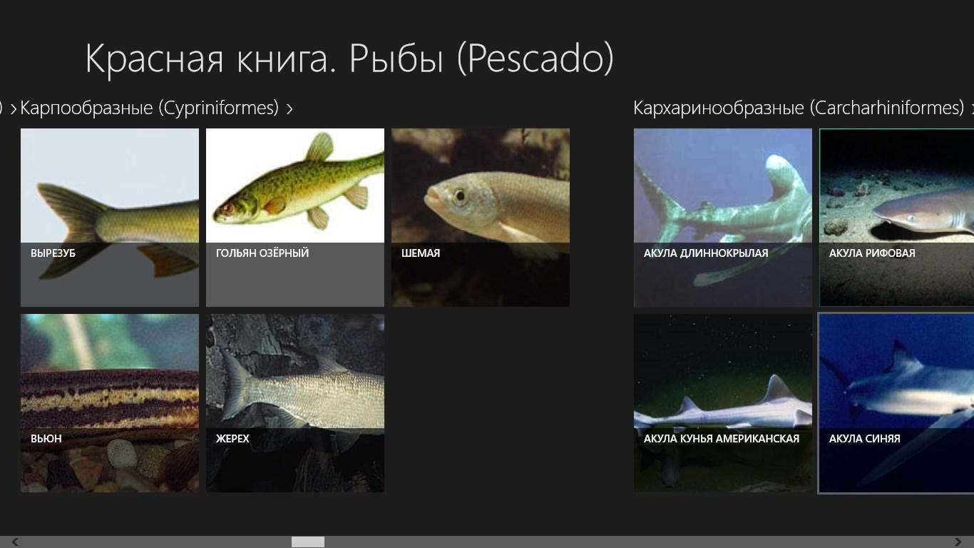 Вкусовые качества рыбы столь хороши, что ежегодно ее вылавливают 70 тонн.