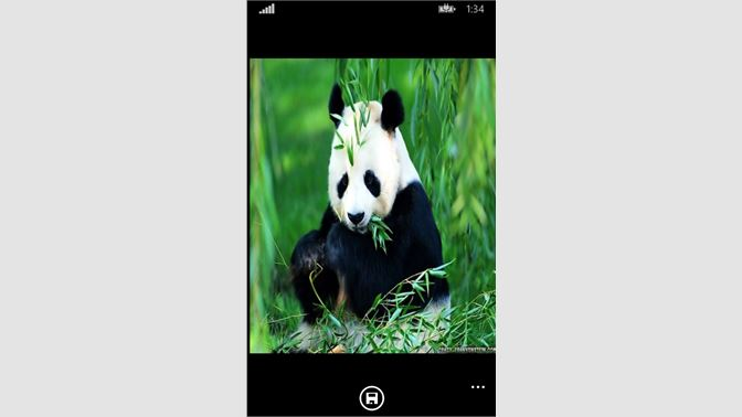 Obtener Cute Panda Wallpapers Microsoft Store Es Cl