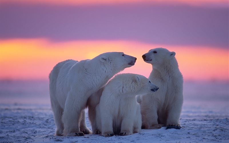 Polar Animals Screenshot